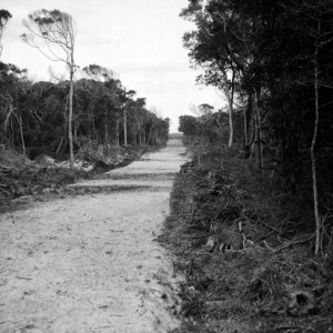 Believed to be early construction of the road through Main Beach circa 1930s George A Jackman, photographer
