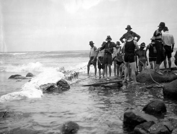 Whale carcas on Burleigh beach Christmas season 1926 George Jackman photographer